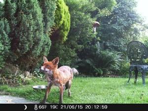 Aufnahmen einer Wildkamera